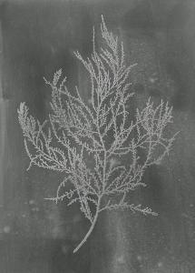 Silver Foil Algae III on Black by Jennifer Goldberger