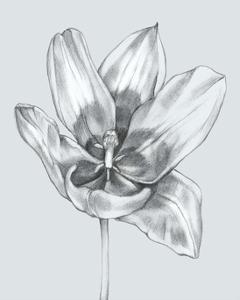 Silvery Blue Tulips II by Jennifer Goldberger
