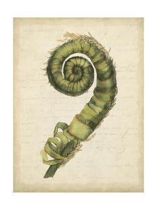 Small Fiddlehead Ferns II by Jennifer Goldberger