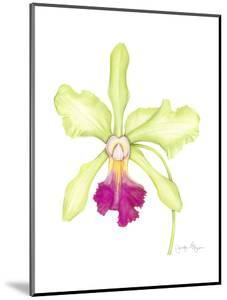 Small Orchid Beauty III by Jennifer Goldberger