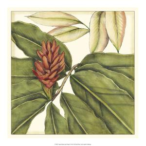 Tropical Blooms and Foliage II by Jennifer Goldberger