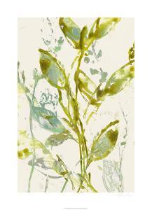 Watercolor Leaves I by Jennifer Goldberger