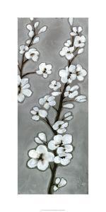 White Blossoms II by Jennifer Goldberger