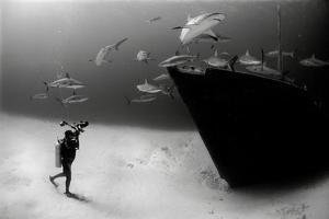 An Underwater Photographer Explores a Shipwreck as Caribbean Reef Sharks Circle Nearby by Jennifer Hayes