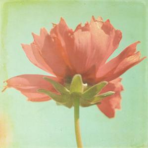 Dream in Pink VII by Jennifer Jorgensen