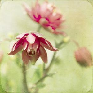 Dream in Pink VIII by Jennifer Jorgensen