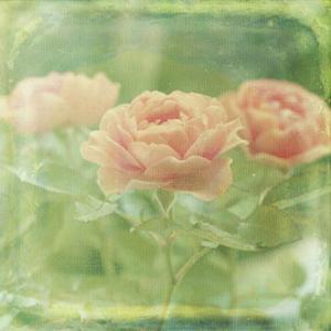 Dream in Pink X by Jennifer Jorgensen
