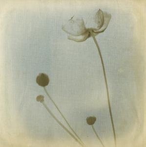 Faded Away I by Jennifer Jorgensen