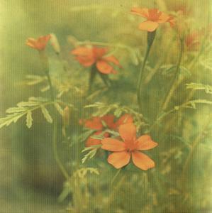 Filtered Dreams I by Jennifer Jorgensen