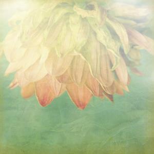 Pastel Paths II by Jennifer Jorgensen