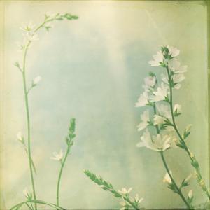 Pastel Paths IX by Jennifer Jorgensen