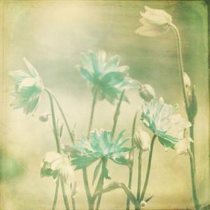 Pastel Paths VII by Jennifer Jorgensen