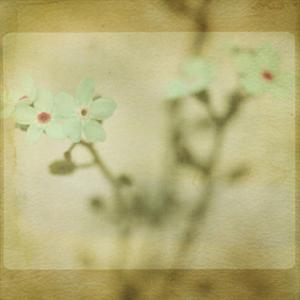 Pastel Paths XI by Jennifer Jorgensen