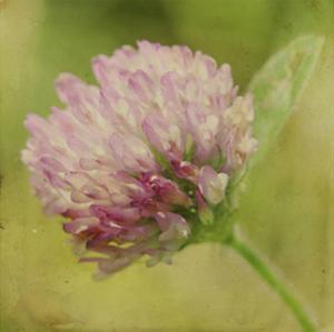 Waiting on Purple VII by Jennifer Jorgensen