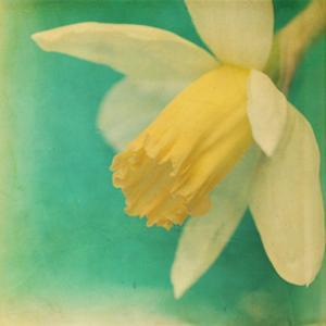 White Flowers V by Jennifer Jorgensen