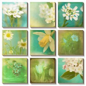 White Flowers by Jennifer Jorgensen