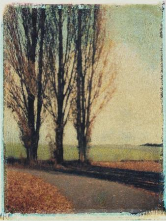 3 Poplars Late Fall by Jennifer Kennard