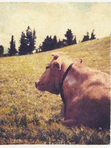 Alpine Cow No.2 by Jennifer Kennard