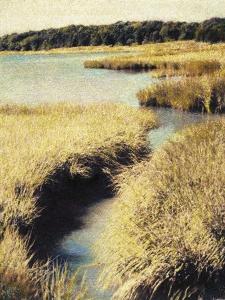 Cape Cod Tidelands by Jennifer Kennard