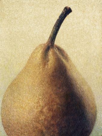 D'Anjou Pear by Jennifer Kennard