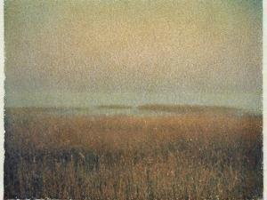 Eastham Marsh by Jennifer Kennard