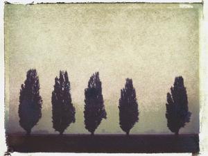 Five Poplars by Jennifer Kennard