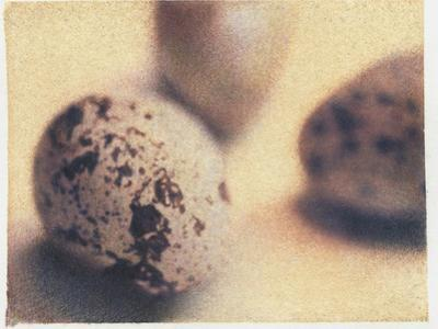 Quail Eggs by Jennifer Kennard