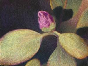 Rhododendron Bud by Jennifer Kennard