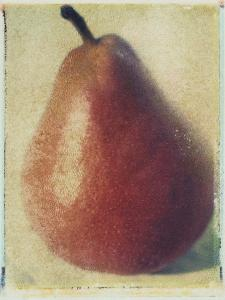 Seckle Pear by Jennifer Kennard
