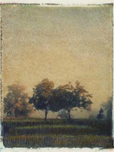Sheep Meadow by Jennifer Kennard