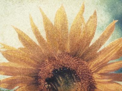 Sunflower by Jennifer Kennard