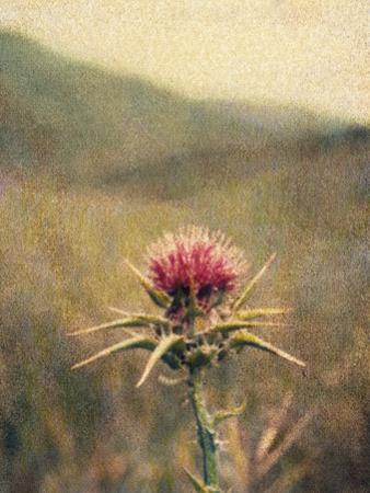 Thistle No.2 by Jennifer Kennard