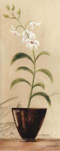 Asian Orchid I by Jennifer Matla