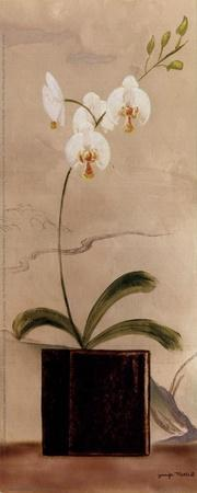 Asian Orchid II