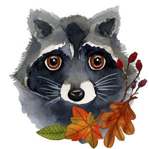 Raccoon by Jennifer Nilsson