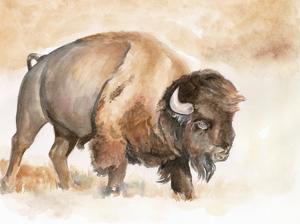 Buffalo Roam II by Jennifer Parker
