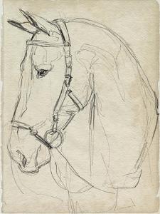 Horse in Bridle Sketch II by Jennifer Parker