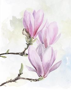 Magnolia Blooms I by Jennifer Parker