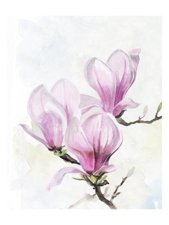 Magnolia Blooms II