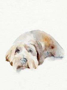 Scruffy Puppy II by Jennifer Parker