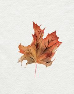 Watercolor Autumn Leaf II by Jennifer Parker
