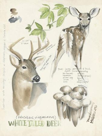 Wildlife Journals IV