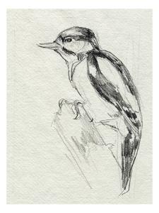 Woodpecker Sketch I by Jennifer Parker