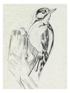 Woodpecker Sketch II by Jennifer Parker