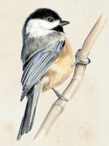 Little Bird on Branch II by Jennifer Paxton Parker