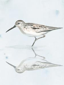Sandpiper Reflections II by Jennifer Paxton Parker