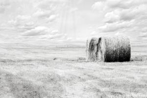 Hay Bales by Jennifer Pugh