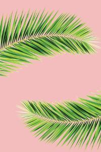 Pink Palm II by Jennifer Pugh