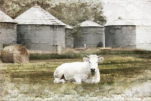 White Cow by Jennifer Pugh