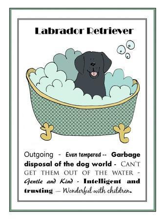 XL Black Labrador